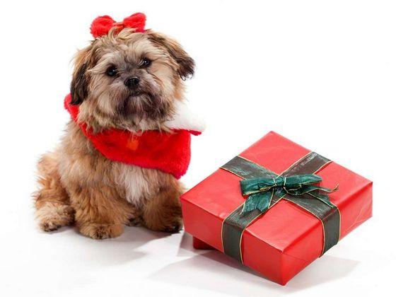 Friendship-Day-Dog-Gift-Ideas-PetSutra.jpg