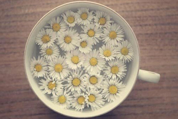 daisy-water.jpg
