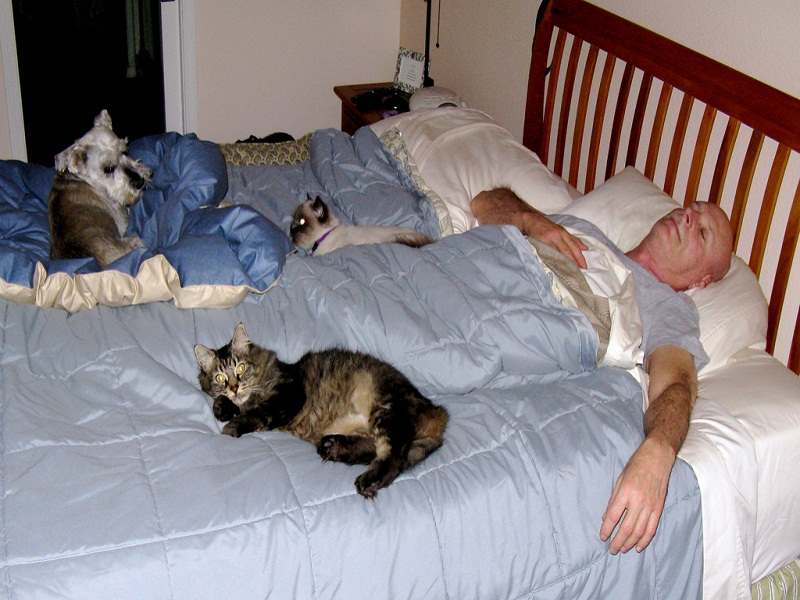 man-with-pets-on-bed.jpg