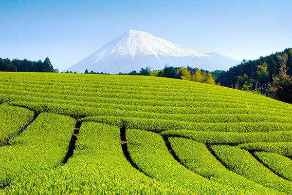 green-tea-asian-ingredient-in-beauty-routine.jpg