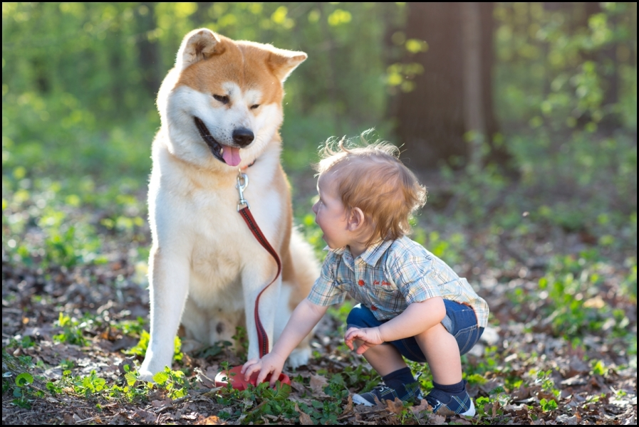 Dogs-are-Indeed-Mens-Best-Friends.-Here-are-12-Reasons-Why.jpg