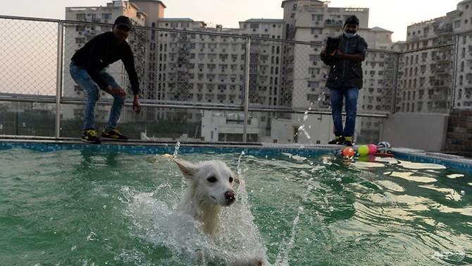 critterati-dog-hotel-2.jpg
