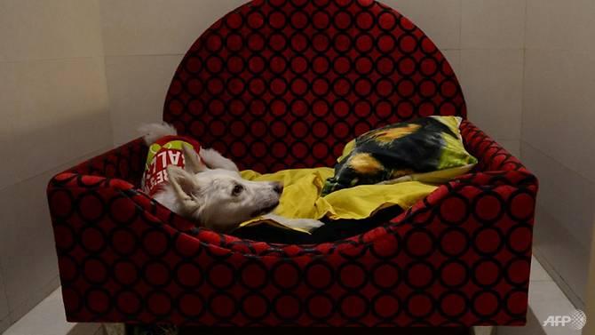 critterati-dog-hotel-4.jpg