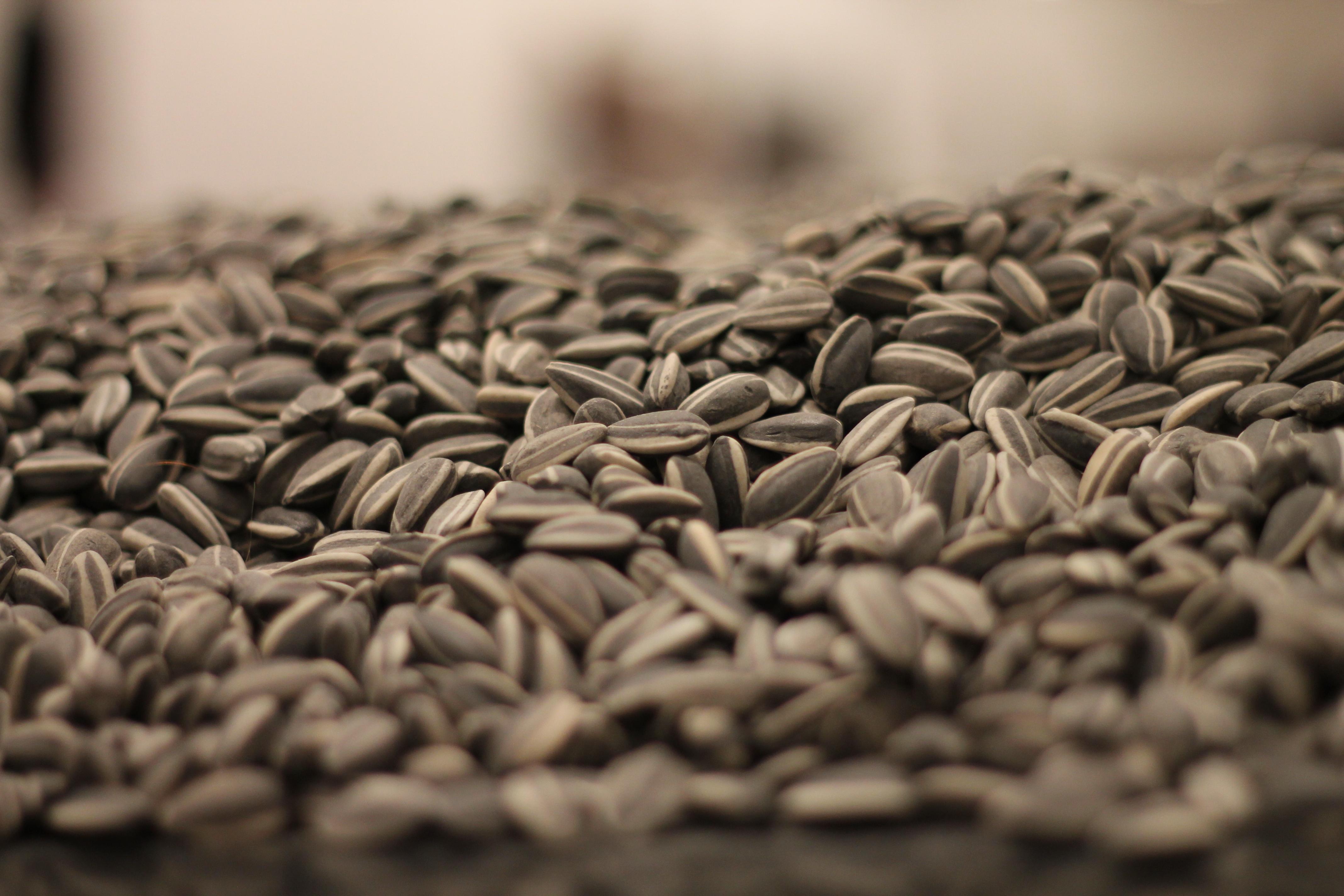 Sunflower_Seeds_by_Ai_Weiwei.jpg