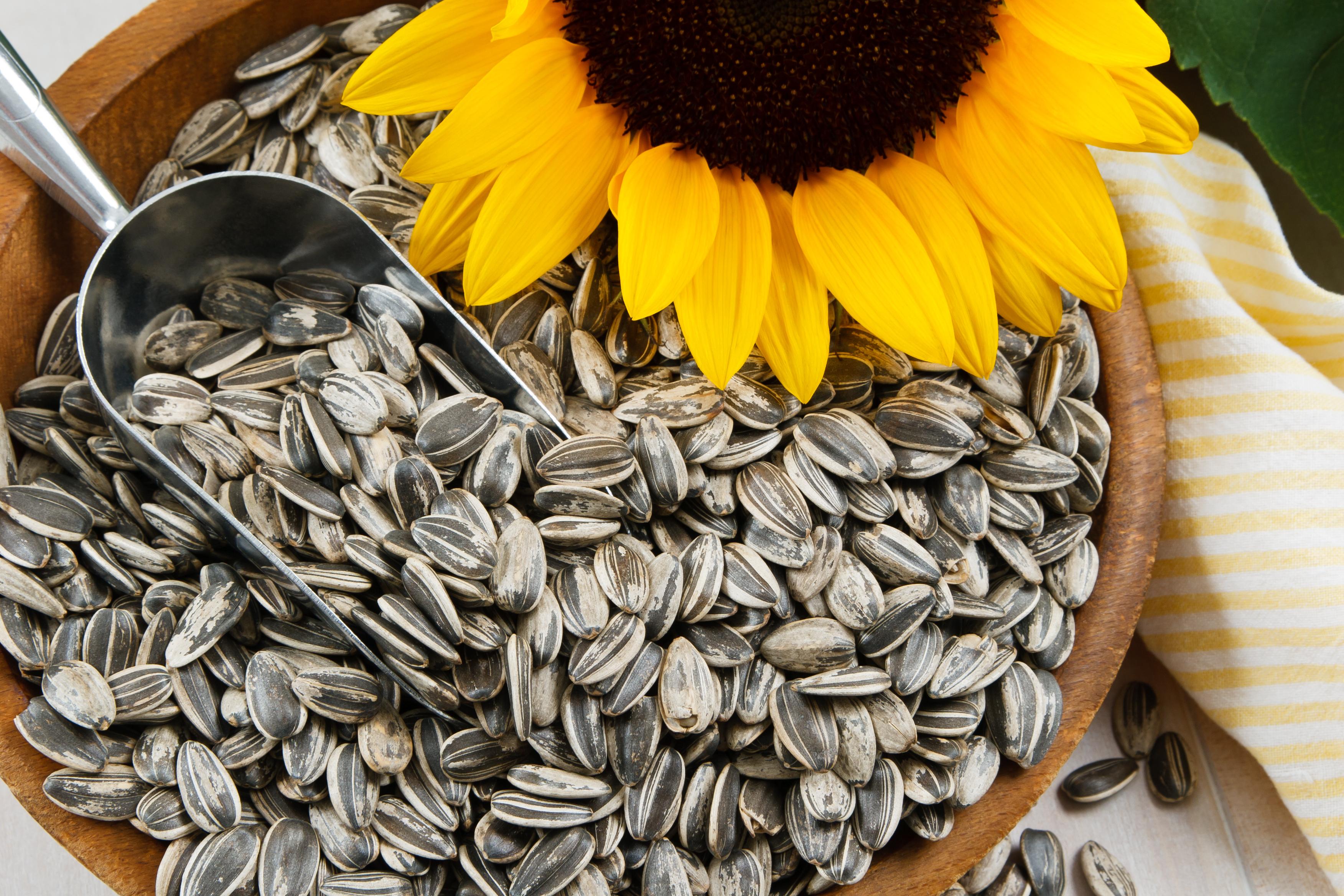 201986-3504x2336-sunflower-seeds.jpg