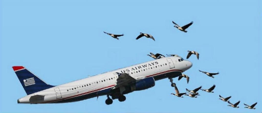bird-plane-collision-study-july20121.jpg