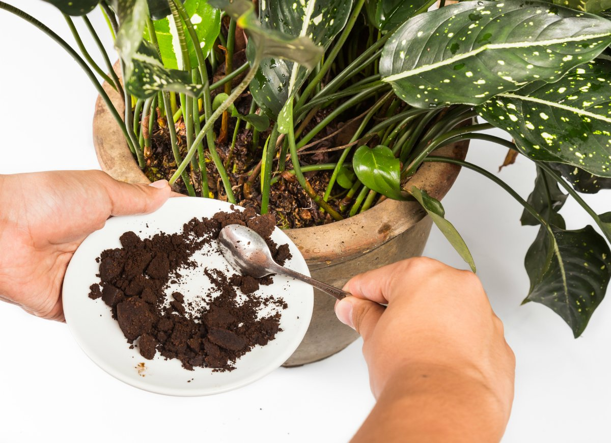 fertilize-plants-with-coffee-grounds.jpg