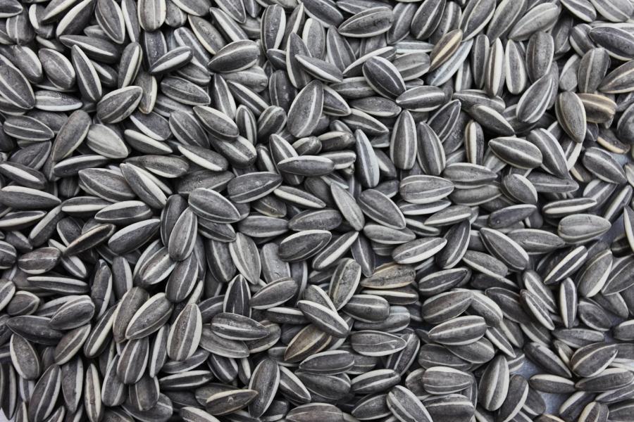 Ai-Weiweis-Sunflower-Seeds-Detail-Photo-3.jpg