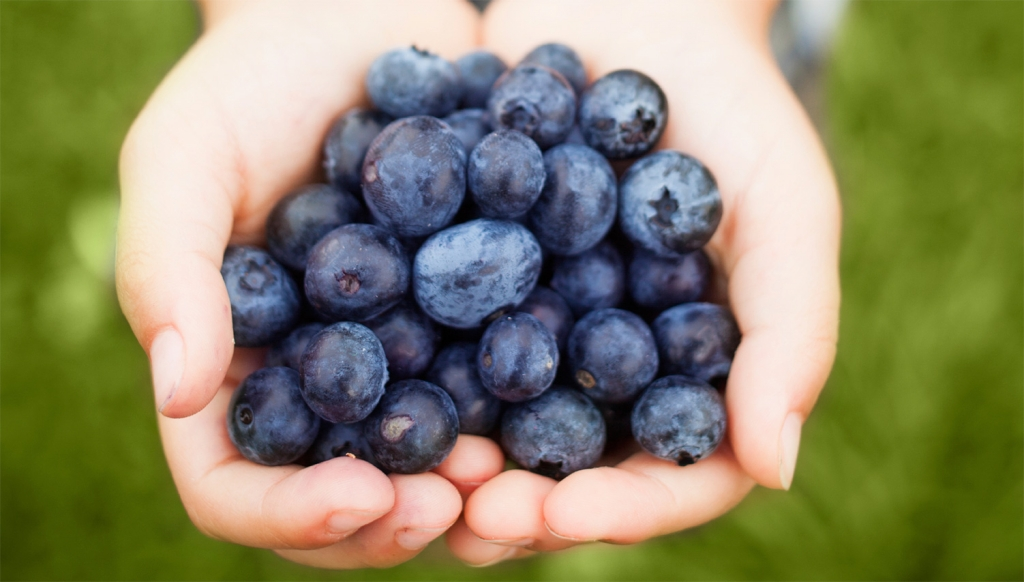 handful-of-blueberries-1502.jpg