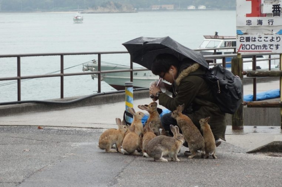 03_umbrella_Its-True-Japan-Has-an-Island-Filled-with-Bunnies_5657836e_Michael-YangREX-760x506.jpg
