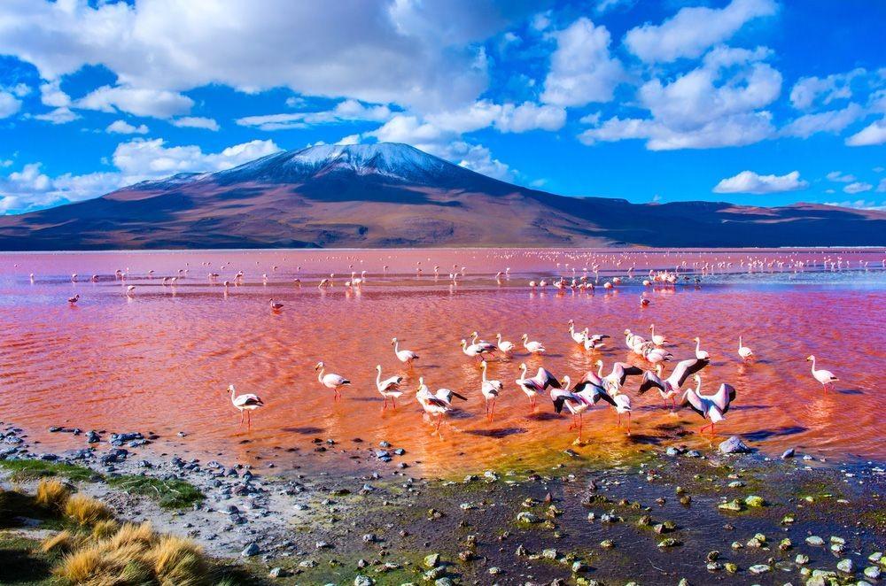 Laguna-Colorada-Bolivia-Flamingos.jpg.1000x0_q80_crop-smart.jpg