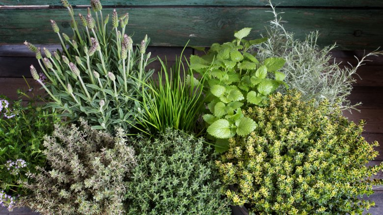 grow-your-own-herbs-1495224798.jpg