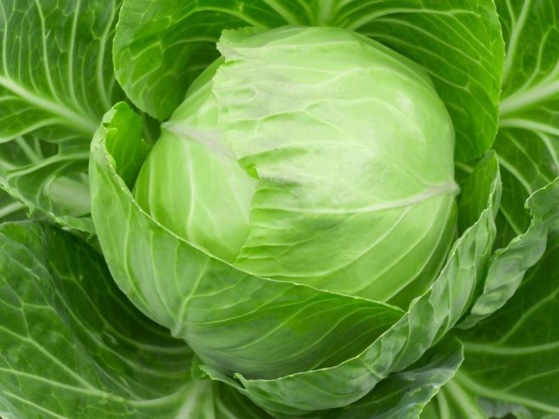 Cabbage11.jpg