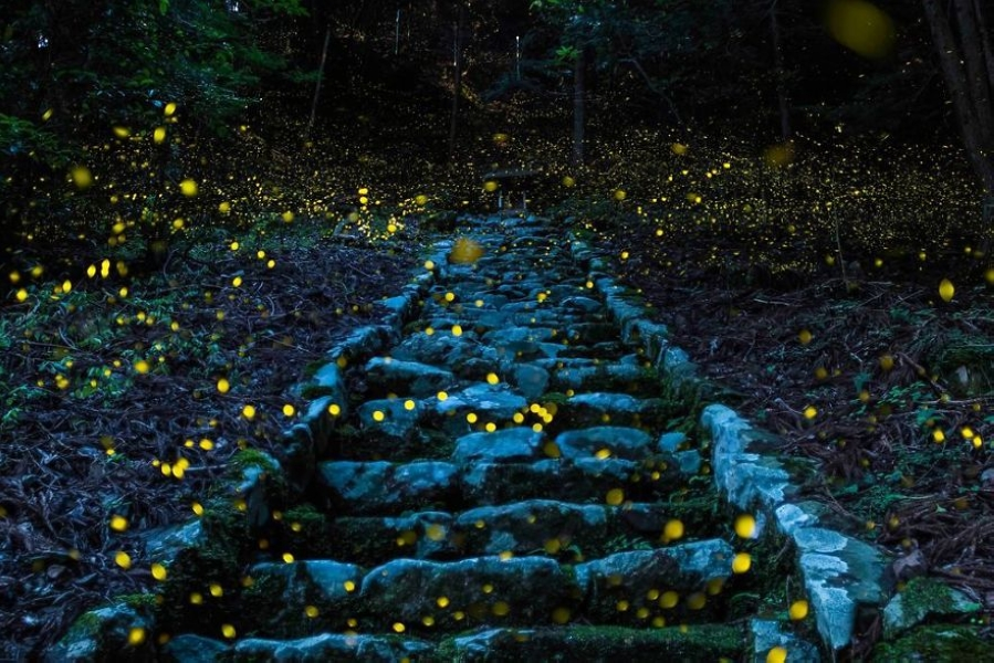 national-geographic-travel-nature-photographer-of-the-year-contest-2017-61-595c93b68f067__880.jpg