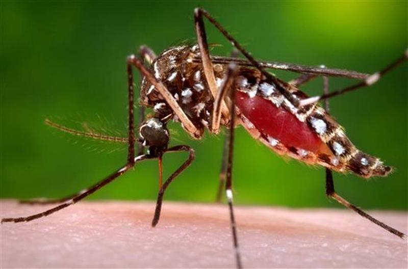 zika_mosquito_5_things_2.jpeg