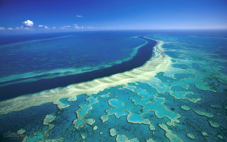 great-barrier-reef-hardy.jpg