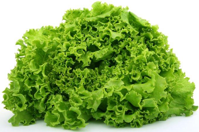Fresh-Green-Lettuce-For-Dogs.jpg