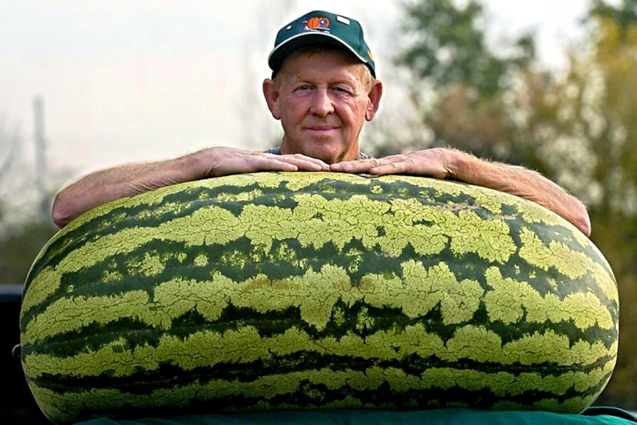 00-biggest-watermelon-in-world-01-13-08-14.jpg