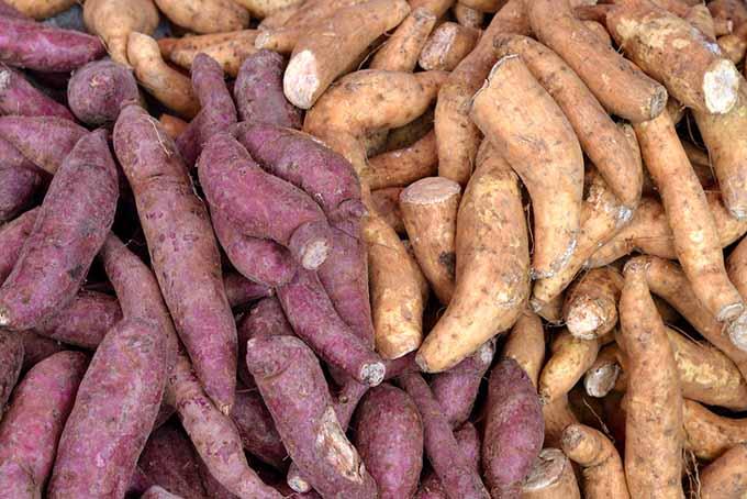 different-sweet-potato-varieties.jpg