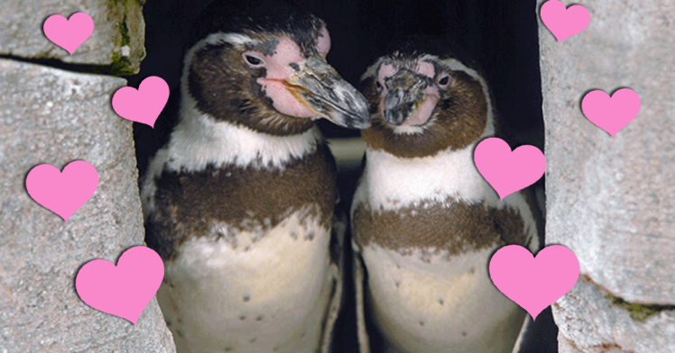 penguins-and-hearts.jpg